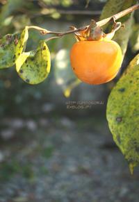 柿色 - 一瞬をみつめて