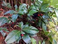 赤い実 - だんご虫の花