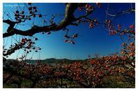 * 秋の楽園 * - 心写心癒  ~心の鏡~