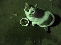 膝乗り公園猫の珠須(すず)ちゃん - もるとゆらじお