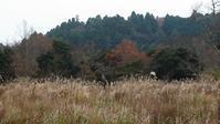 やれやれ、です - 千葉県いすみ環境と文化のさとセンター
