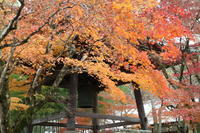 修善寺の紅葉 - 木洩れ日 青葉 photo散歩