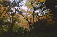 紅葉狩り−7(了) - 日々のしをり