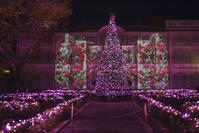 星の王子さまミュージアムのクリスマス♪ - エーデルワイスPhoto