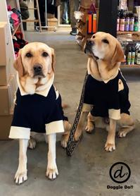 Hello Jam&Ayumu !! - Doggie Do!! / good dog and hello cat !!