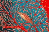 17.12.9平安座発のボートで - 沖縄本島 島んちゅガイドの『ダイビング日誌』