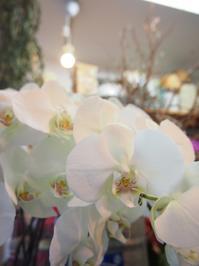 胡蝶蘭のホワイトアレンジメント - ルーシュの花仕事