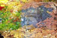 興禅院さんの紅葉で多重露光を試行錯誤してみた(-_-;) - 自然のキャンバス