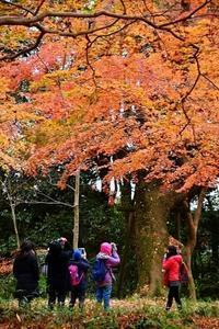 京の都巡り①紅葉ハンター - 写心食堂
