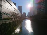 今朝の目黒川 - 新 LANILANIな日々