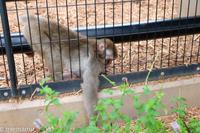 いたずら好きのお猿さん~9月の旭山動物園 - My favorite ~Diary 3~