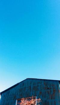 """p780 """" プーさん """"松の川緑道2017年12月10日 - 侘び寂び"""