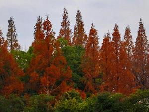 初冬のデンパーク風景 - 小さな感動
