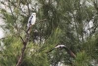 南ぬ嶋(番外編) - 気ままに野鳥観察