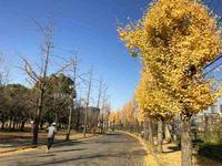 秋から冬へ、そろそろイチョウも散ってきた大阪城公園  2017.12.10 - ちゃーぼー日記