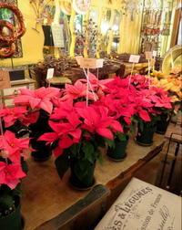 FLOWER FIELD Garden's*季節の花苗がお買い得♪ - ぴきょログ~軽井沢でぐーたら生活~