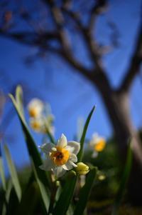 冬の花 - ブナの写真日記