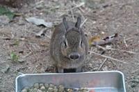 11月のSCZOO~ヒメマーラの赤ちゃんと復活のプレーリードッグ放飼場 - 続々・動物園ありマス。