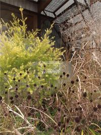 植物的生活873 - Atelier Botanique COCA-Z