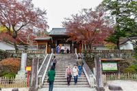修善寺・竹林の小道 - あだっちゃんの花鳥風月