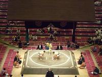 日馬富士問題 貴乃花親方 相撲協会 - SPORTS 憲法  政治