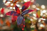 まゝに/残秋の片々 - Maruの/ まゝに