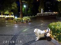 女子会 - サモエド クローカのお気楽日記