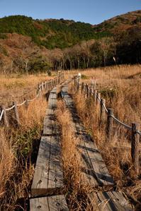 草もみじ - hanako photograph