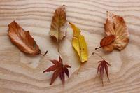 フシギな葉っぱと種 - 満足満腹  お茶とごはん