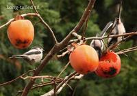 エナガ:Long-tailed Tit - 動物園の住人たち写真展(はなけもの写眞館)