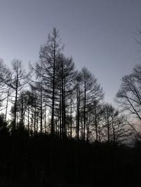 師走の風が身に沁みます - 木洩れ日の森から