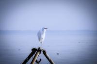 湖岸にて - 写瞬間