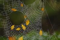 クモの・・・ - 自分らしく、ありのままで(^^♪