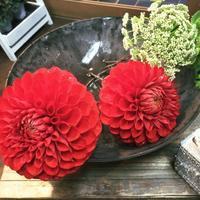 ダリア【朝日てまり】をヘッドパーツにしてみました - ルーシュの花仕事