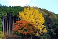 宍粟市内の秋 - 彩