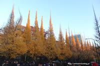 秋色東京 - 一瞬をみつめて