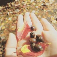 秋の京都 - koe&Kyo 日々燦々