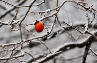 木守柿 - 丹馬のきょうの1枚