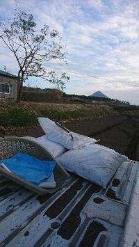 玉ねぎを植えます - 山脇農園ブログ
