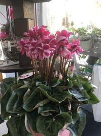 年末のギフトにオススメの花鉢が揃ってます~ - ルーシュの花仕事
