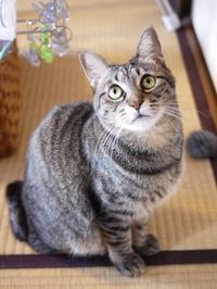 猫のお留守番 キューちゃん編。 - ゆきねこ猫家族