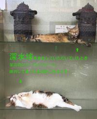 [香港画像ポッと出し]深水埗のショーウィンドー - ONE DAY