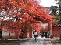 真如堂の楓紅葉を堪能しました。(撮影:11月25日) - ご無沙汰写真館