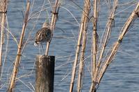 ★海浜公園のイベントのお知らせ - 葛西臨海公園・鳥類園Ⅱ
