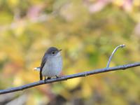 2017 12 13  何時もの公園鳥さん多いものの・・・肩痛く・・・。 - soyokaze3の日記