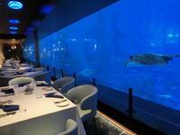 """シーアクアリウム内の 水中レストラン ☆ Ocean Restaurant by Cat Cora ☆ オーシャンレストラン バイ キャットコーラ - Singaporeグルメ☆"""" Ⅱ"""