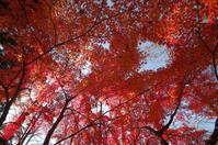 一面の紅 - akiy's  photo