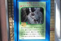 11月のSCZOO~ナマケモノBABYとヤワゲネズミBABIES!! - 続々・動物園ありマス。