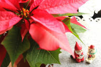 クリスマスカラー☆ - 湘南気まま生活♪