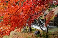 京都の紅葉2017 雨の摩氣神社 - 花景色-K.W.C. PhotoBlog